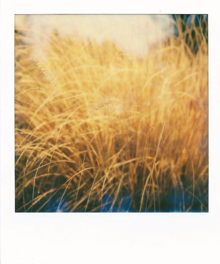 1 Autumn